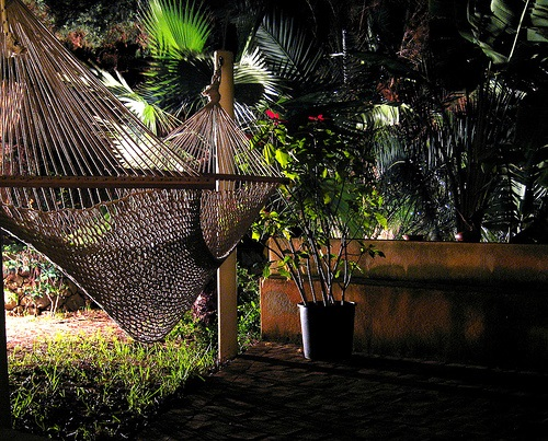 backyard Hammock