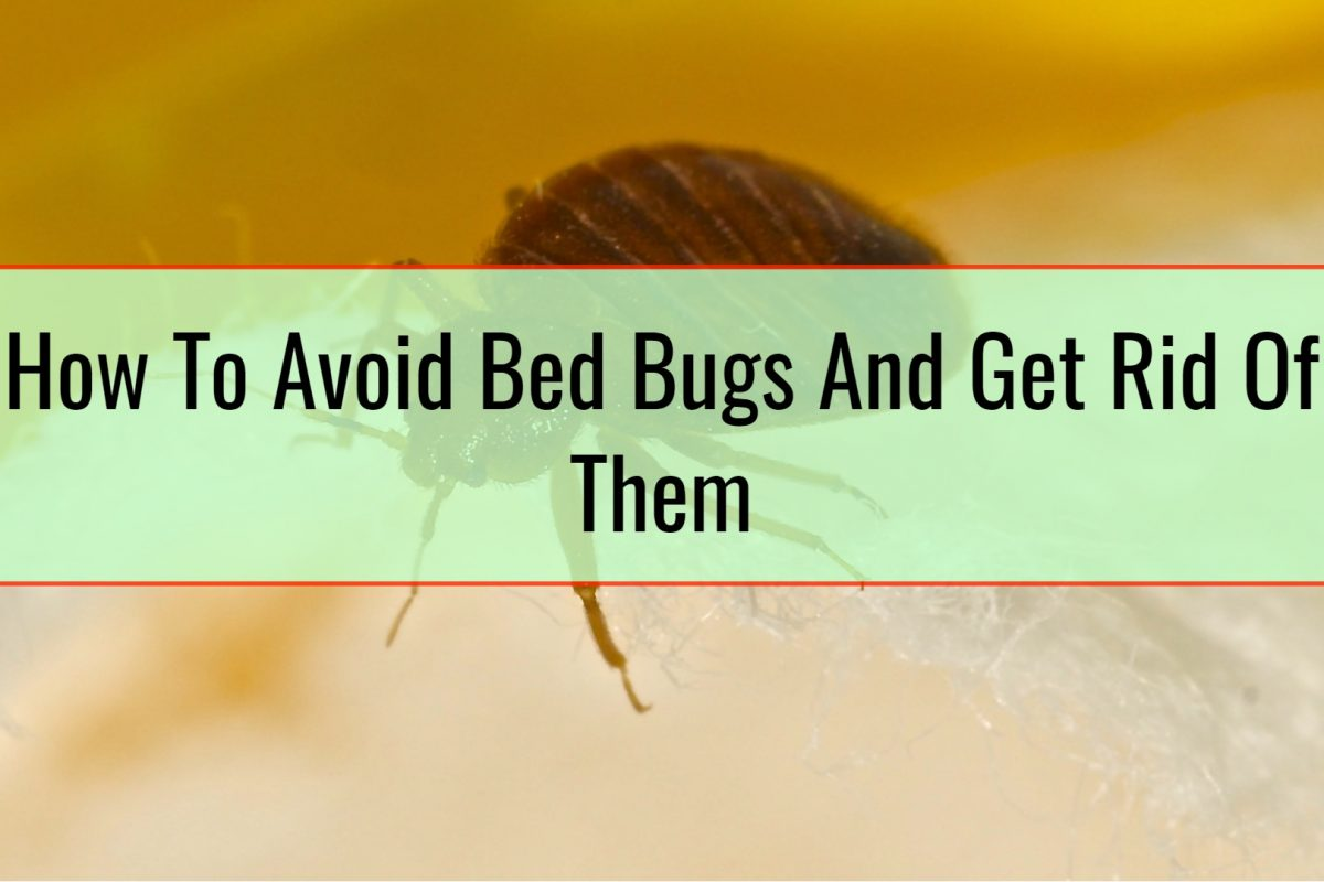 How To Avoid Bed Bugs And Get Rid Of Them