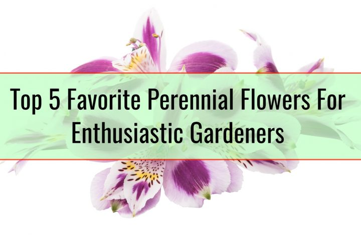 Top 5 Favorite Perennial Flowers For Enthusiastic Gardeners