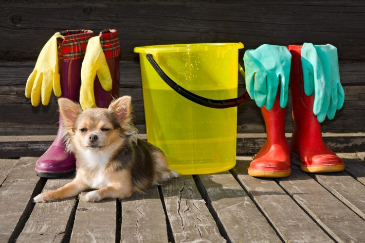 Home Cleaning Tips For Pet Owners