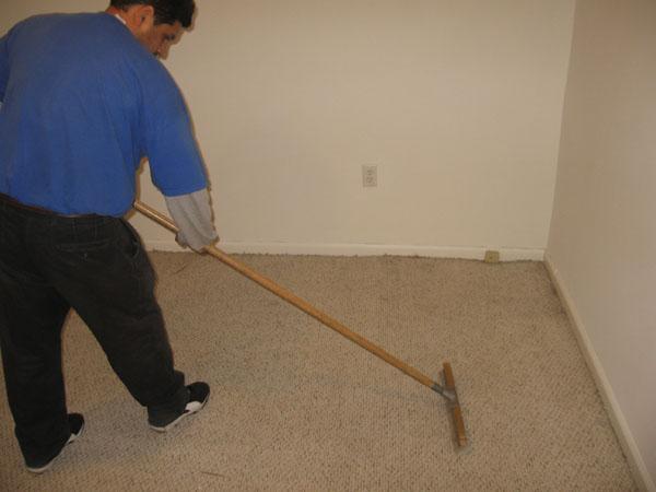 carpet agitation