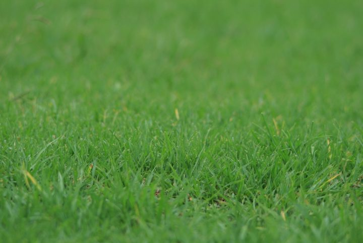 Very Simple Lawn Care Tips To Know Right Now