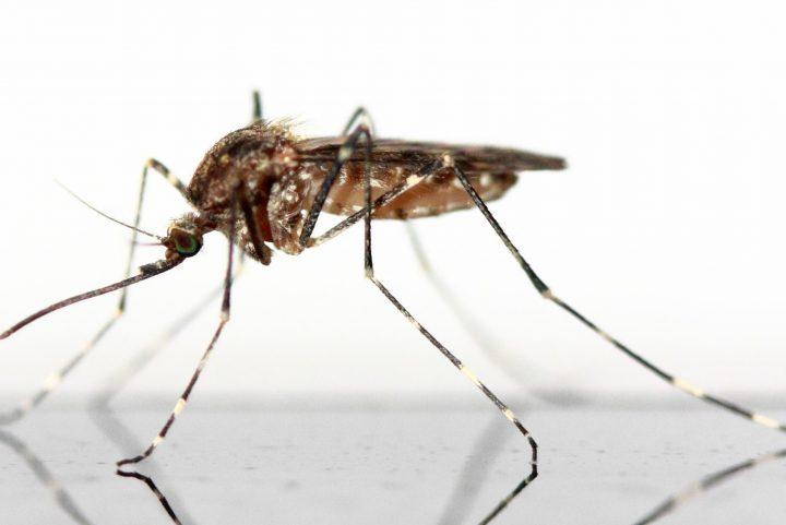 A Homeowner's Guide on How to Get Rid of Mosquitos