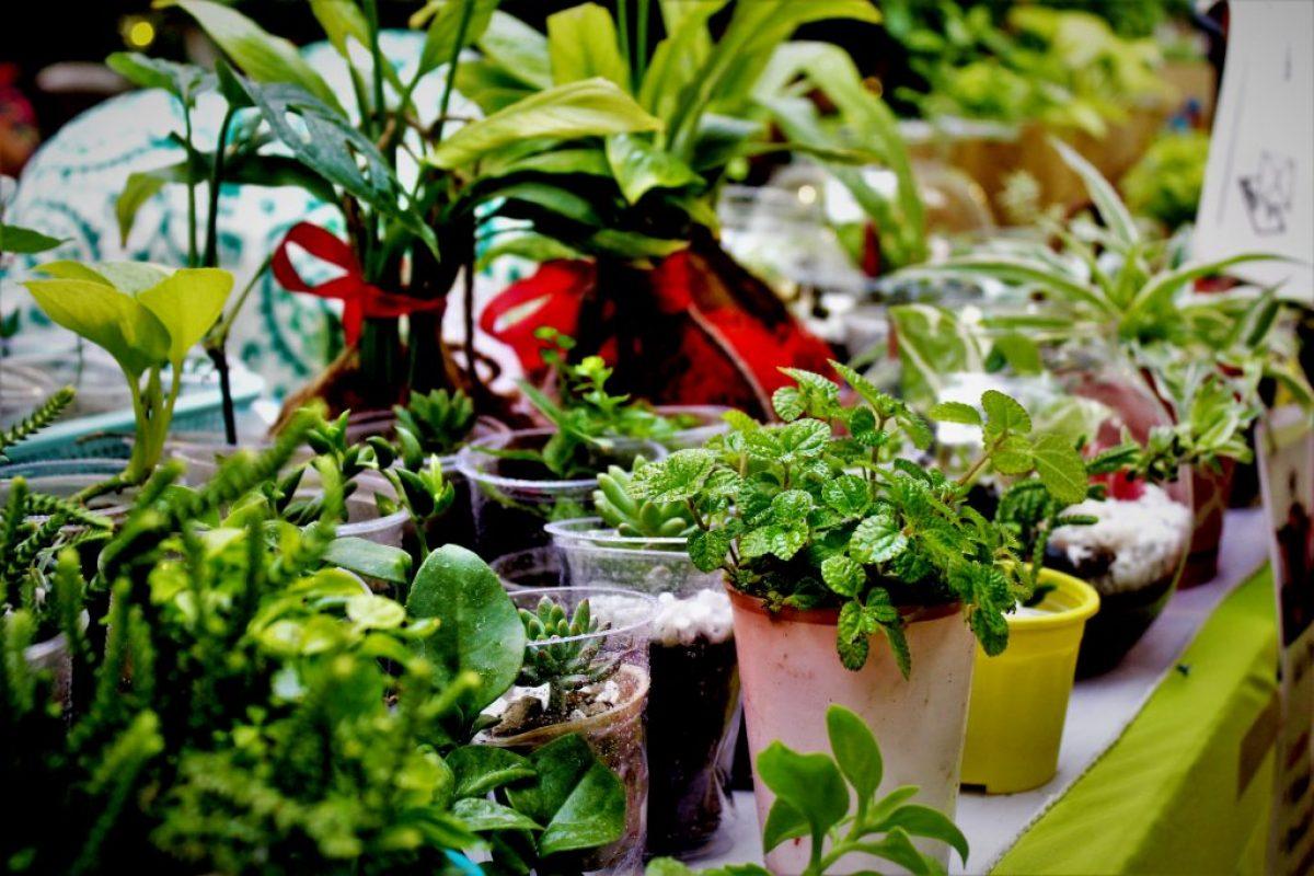 Most Beautiful Indoor Plants To Consider