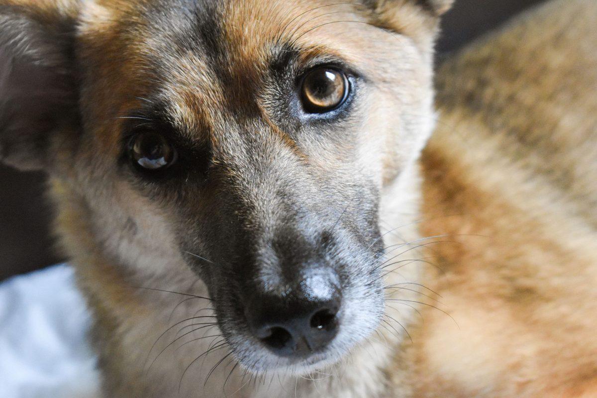 Pet Safety at Home – Meningitis, Polirritmo, Mumps, Rubella, and Canine Distemper