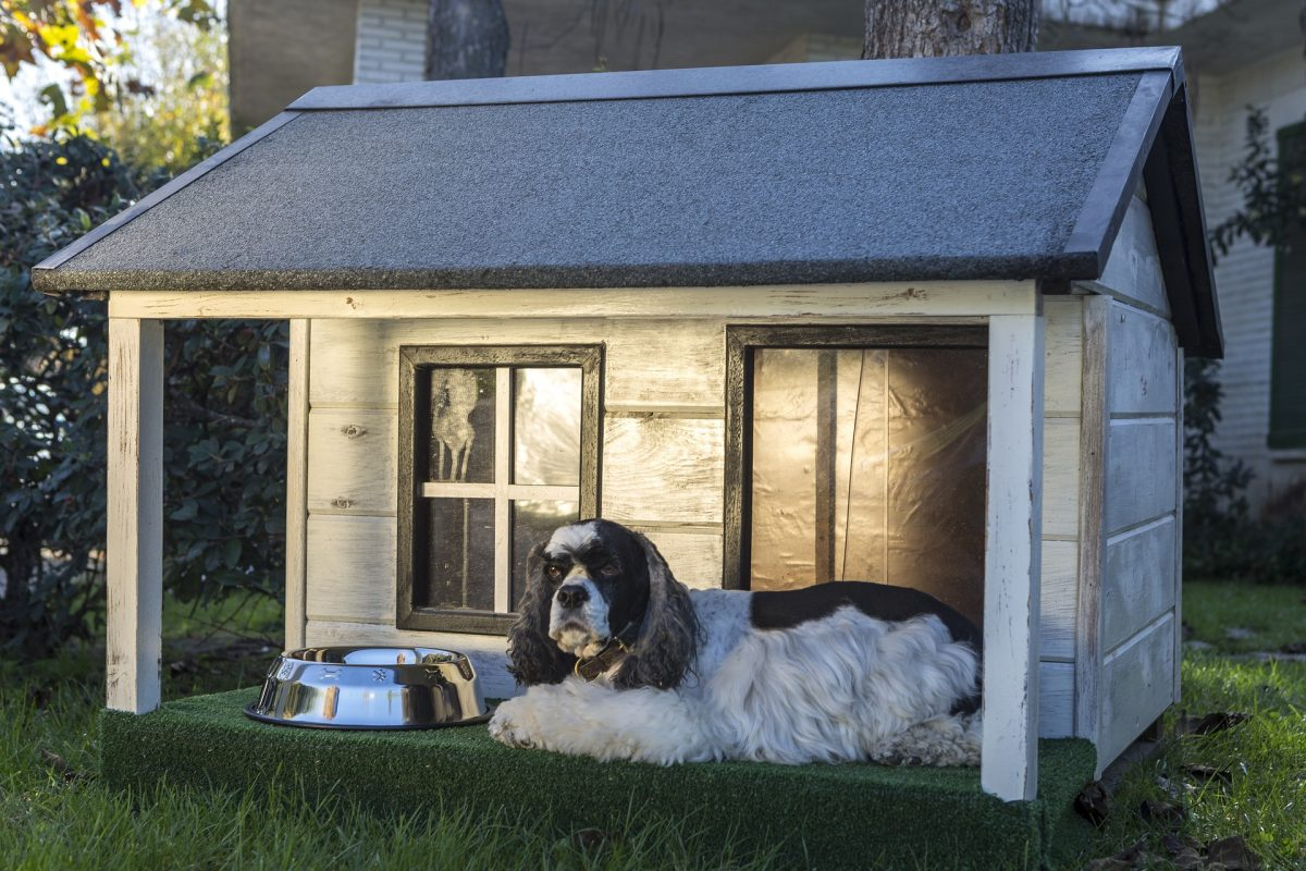 A Guide to Finding the Best Dog House Design